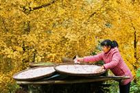 勤劳的农妇