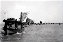 古运河上的船队之二