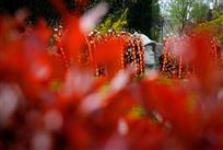 鲜花祭英烈