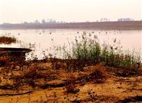 湿地群鸟逐浪波