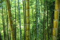故乡的翠竹