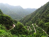 森林中的盘山路