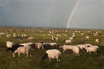 草原出彩虹