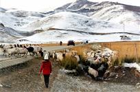 雪山下的牧场