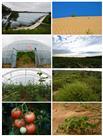 沙地农场--从荒漠到绿洲的践行