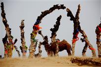 怪柳与骆驼