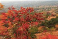《飘飞的红叶》
