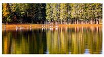 白鹭的家乡兰湖