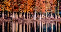 静静的秋倒影