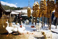 农家动物园