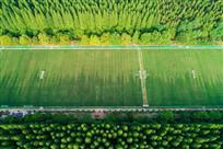 绿色森林中的训练场