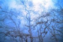雾中春寻梦