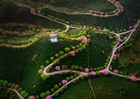 《茶山之路》