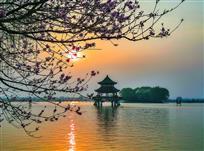 《桃花影日八里河》