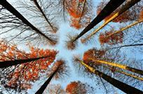 《秋天的千岛湖》