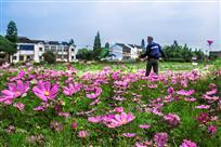 鲜花盛开的村庄