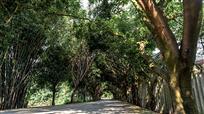 绿色乡间路