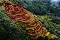 万绿丛中红土地