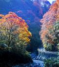 秋日画中游