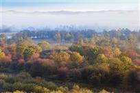 诺敏河湿地秋色